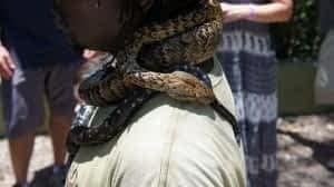 snake at swamp safari