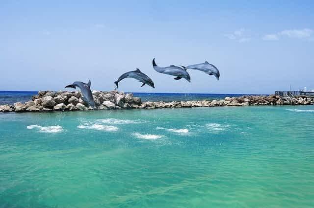 Famaily activity in Ocho Rios Jamaica